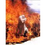 Burnshield brandwondendekens